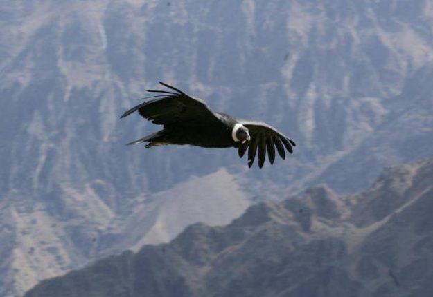 Tour Vuelo Condor Todo el Día